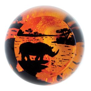 On Safari - Rhino